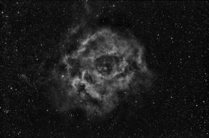 Rosette-4x-20min-Ha